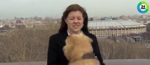 perro roba microfono a presentadora